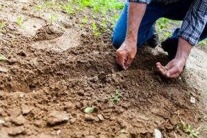 análisis de agronomía